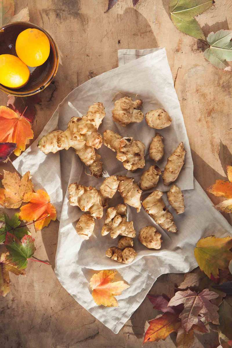 Overhead shot of a dozen or so large sunchoke roots on a linen cloth, on a rustic wooded table bathed in fall light.