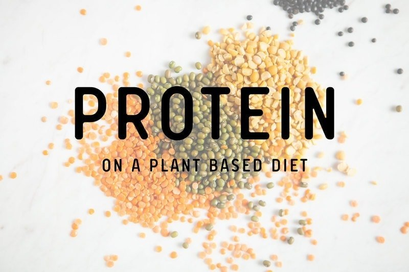 Protein on a Plant Based Diet