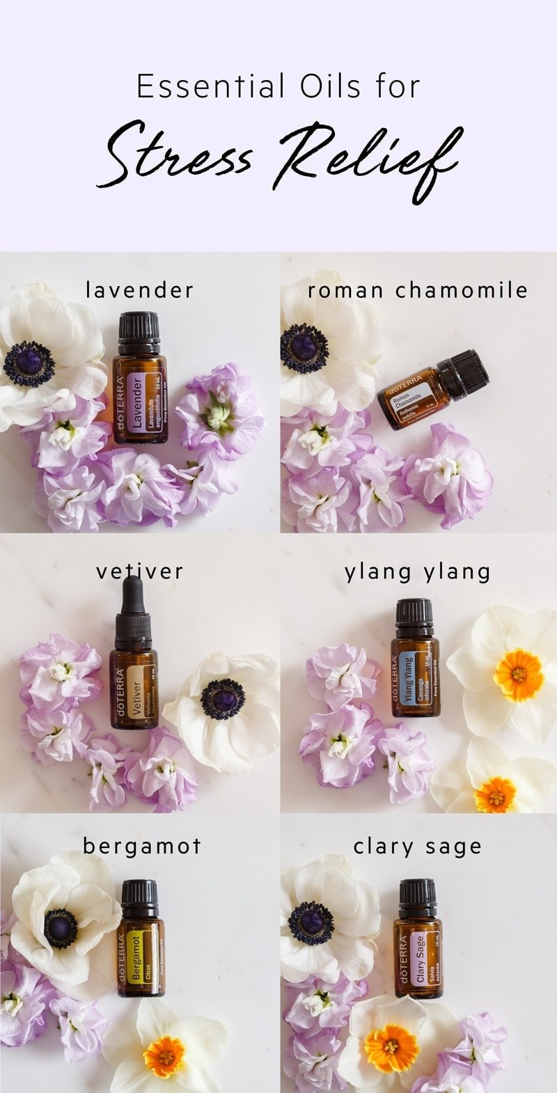 Top 6 Essential Oils for Stress and Relaxation + how to use them. #doterra #doterrarecipes #stress #essentialoilsdoterra #essentialoils #essentialoilsanxiety #essentialoilshealth #stressrelief #AscensionKitchen