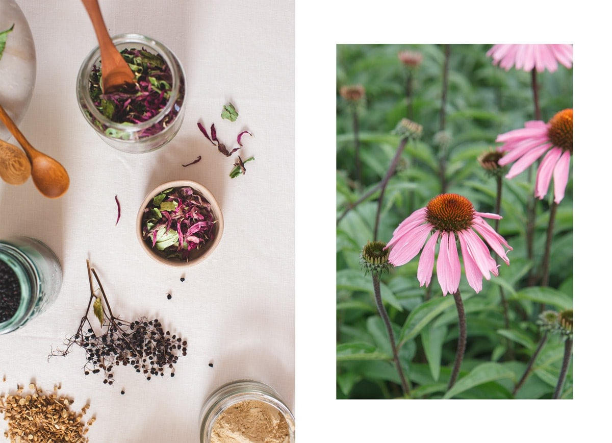 Image on the left is dried echinacea in a jar, on the right is echinacea growing in the garden