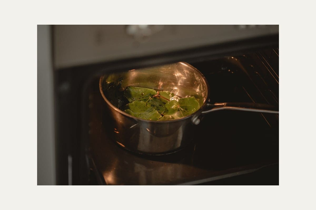 A saucepan filled with fresh kawakawa and oil, inside the oven, where it will now infuse on low heat for 6 hours.